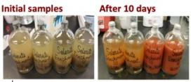 The change in color from the solution on the left over 10 days to the color on the right indicates the biological transformation of samples through the reactive barrier the ERC developed.